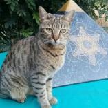 pyramid-cat